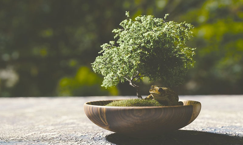 Post image Active Bonsai Clubs in the UK to Join Ashfield Bonsai Club - Active Bonsai Clubs in the UK to Join