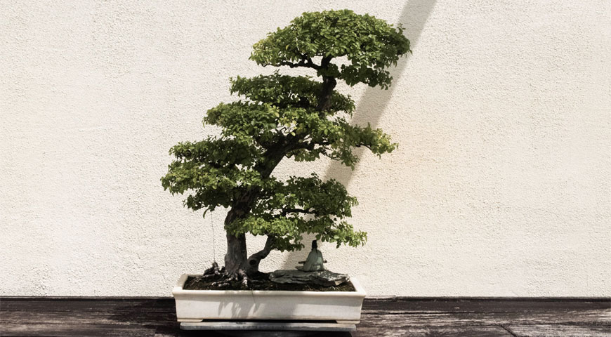 Featuredimage Bonsai Care Tips for Beginners - Bonsai Care Tips for Beginners