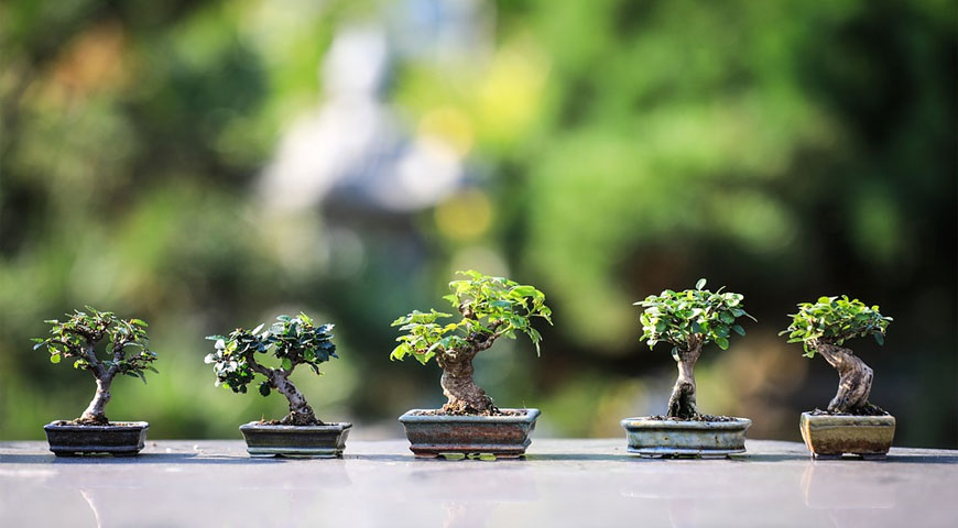 Perks of Joining a Bonsai Club here in the UK