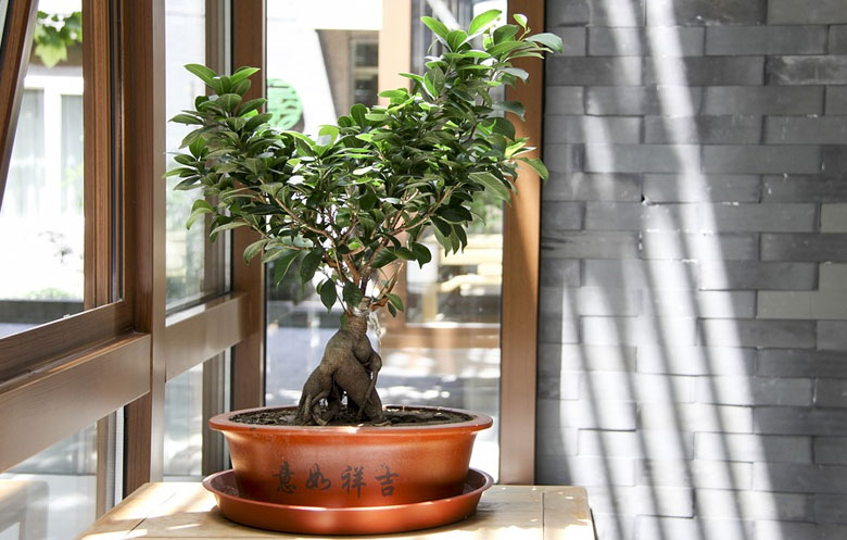 Post image Bonsai Care Tips for Beginners Position your trees well - Bonsai Care Tips for Beginners
