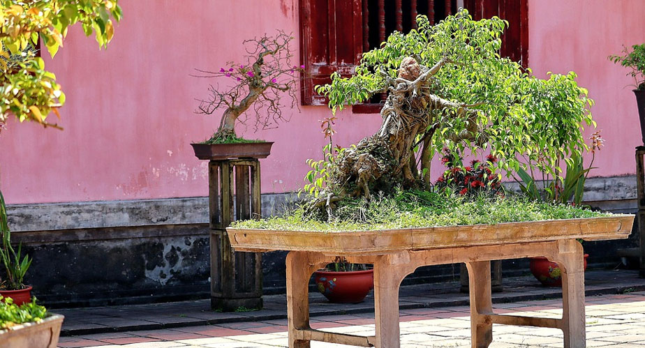 Post image Perks of Joining a Bonsai Club here in the UK Free Tips - Perks of Joining a Bonsai Club here in the UK