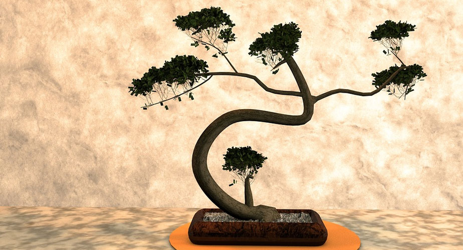 Post image Perks of Joining a Bonsai Club here in the UK Front Row Ticket - Perks of Joining a Bonsai Club here in the UK