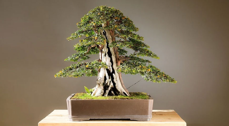 Post image Amazing Habits You Might Want to Pick Up for a Healthier Lifestyle The Art of Bonsai - Amazing Habits You Might Want to Pick Up for a Healthier Lifestyle